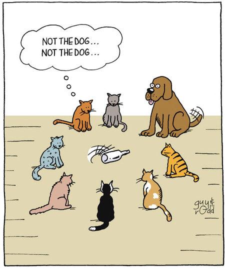 notthedog