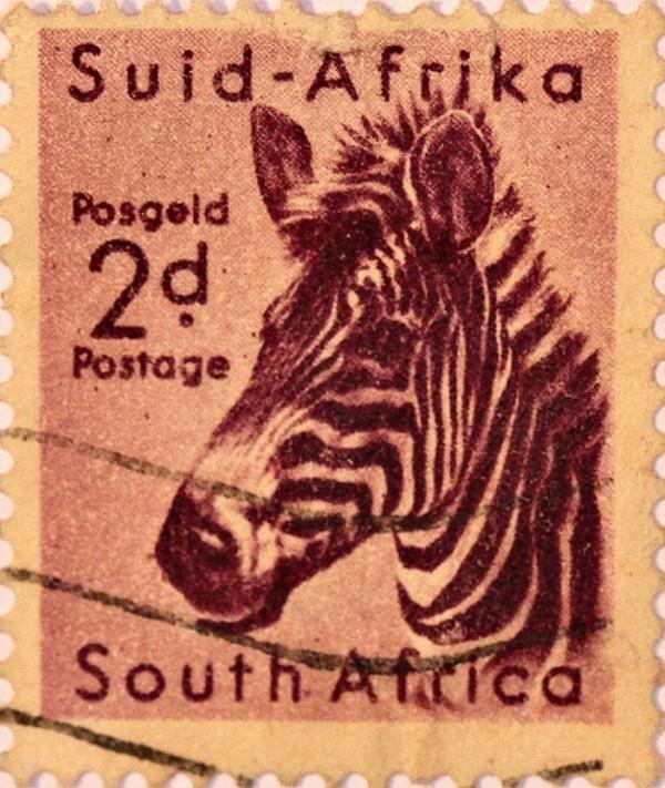zebra-mammal-postage-stamp-6